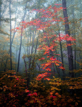 Tanglewood Forest by William Schmid