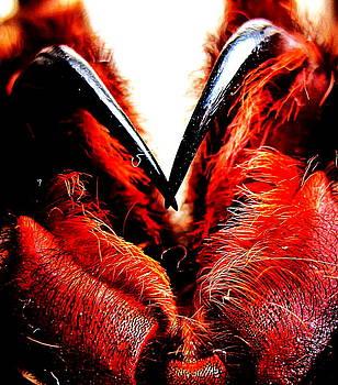 Tarantula Fangs by John King