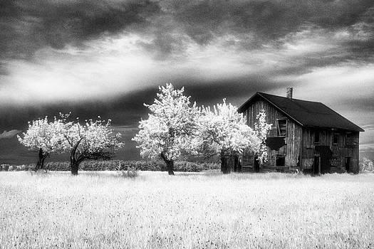 Tawas Barn by Jeff Holbrook