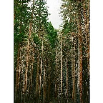 #tbt Yosemite 2 Weeks Ago by Ariane Moshayedi
