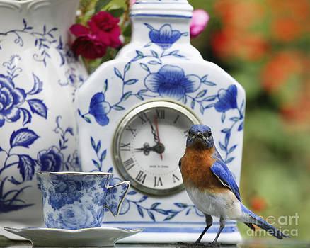 Tea Time for Billy Bluebird Photo by Luana K Perez