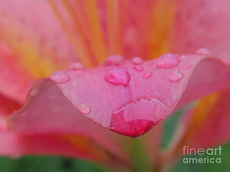 Tears from Heaven by David Lankton
