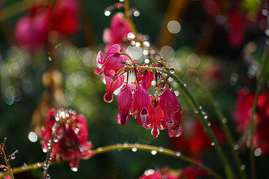 Tears of the Heart by Beckie Fitgerald
