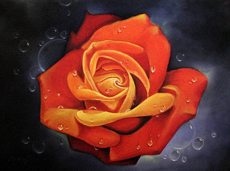 Tears Rose by Mardare Constantin Cristi