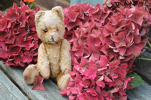 Ted Among Hydrangea by Emma Manners