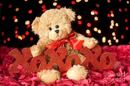 Teddy xoxo by Dolly Genannt