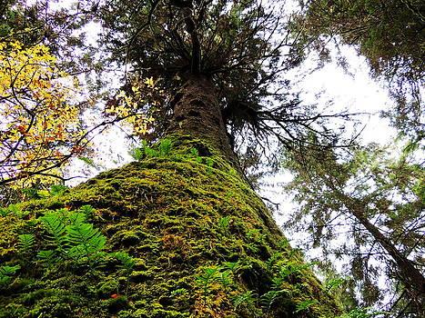 Tell me Tree by Karen Horn
