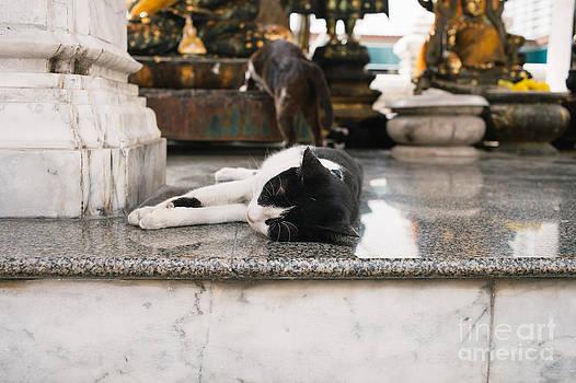 Dean Harte - Temple Cats