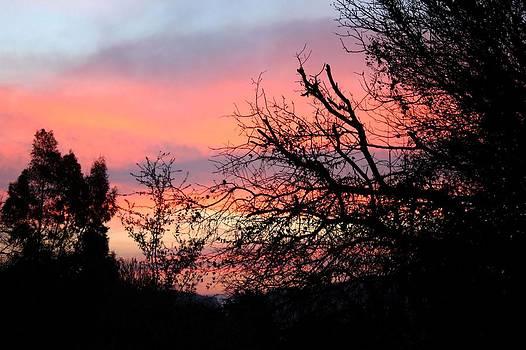 Tracey Harrington-Simpson - Ten Minutes Before Sunrise