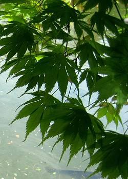 Tender Maple Leaves by Melissa McCrann
