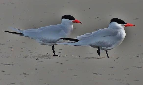 Terns in the Wind by Helen Carson