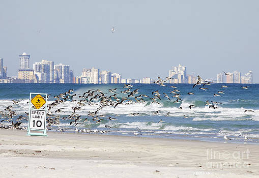 Deborah Benoit - Terns On The Move