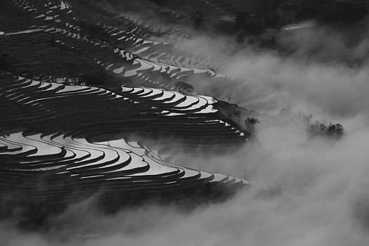 Terraced rice field by Jason KS Leung