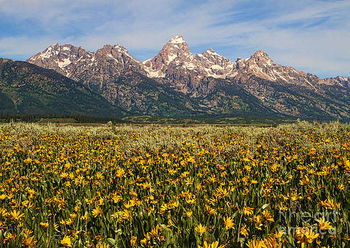 Tetons and Yellow by Edward R Wisell
