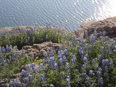 Texas Bluebonnets At Lake Travis by Rebecca Cearley