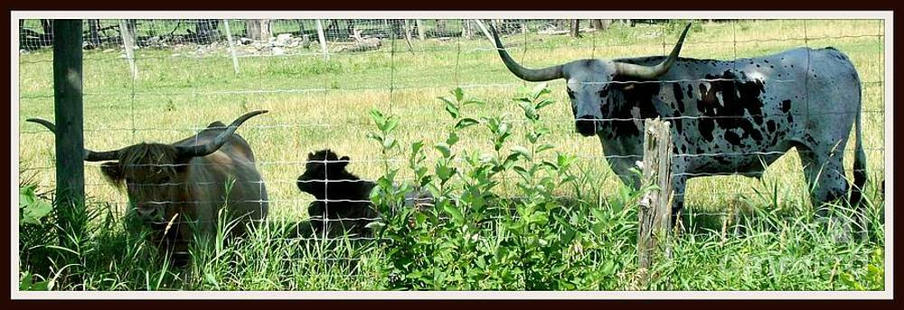 Gail Matthews - Texas Longhorn Family