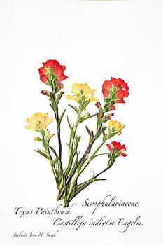 Texas Paintbrush 1 by Roberta Jean Smith