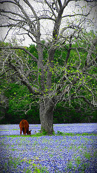 Texas Paradise by Lisa Waggoner