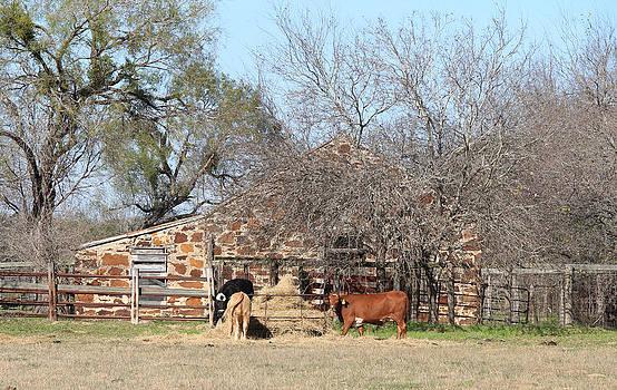Texas Roadside by Carrie Godwin