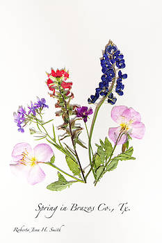 Texas Spring Flowers by Roberta Jean Smith