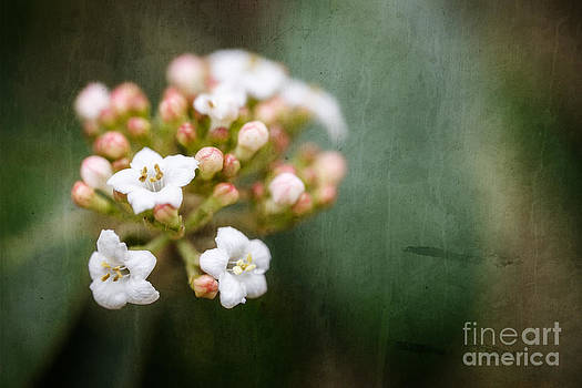 Textured Cluster of Tiny Flowers by Terry Ellis