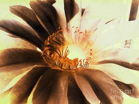 Textured Kaktus Flower. by Victoria Kir