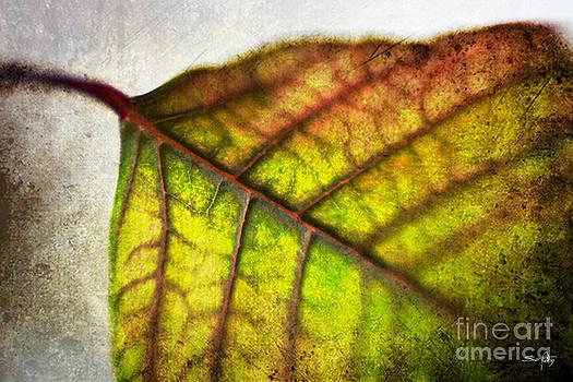 Scott Pellegrin - Textured Leaf Abstract