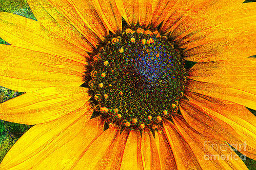 Textured Sunflower by Jeanette Brown