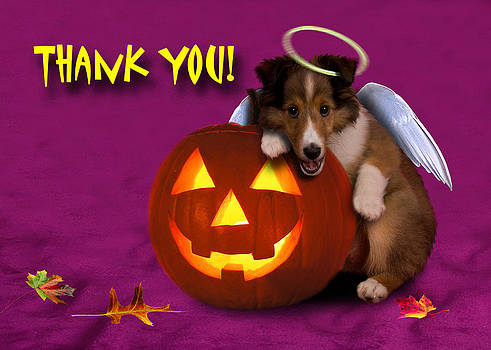 Jeanette K - Thank You Angel Shetland Sheepdog