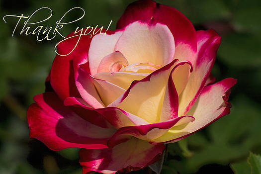 Thank You by Beckie Fitgerald