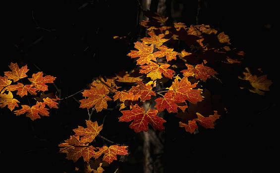 Saija  Lehtonen - That Maple Glow