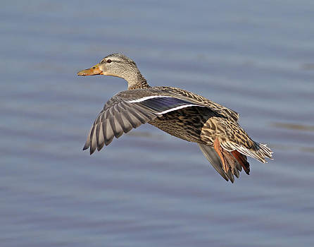 The Approach Glide by Jim Nelson