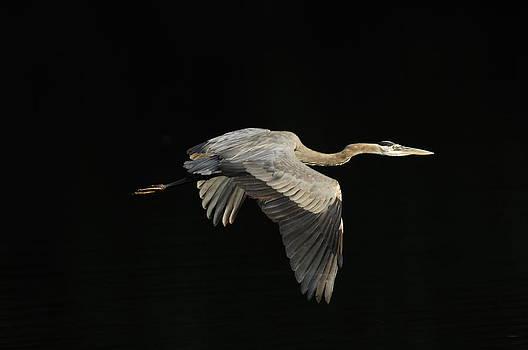 Randall Branham - The Art of Taking Flight Gone