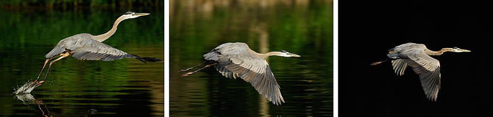 Randall Branham - The Art of Taking Flight