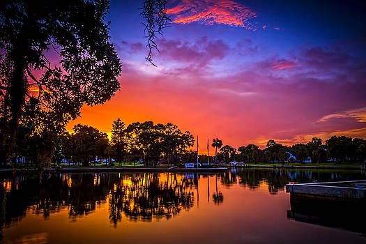 The Bayou by Marvin Spates