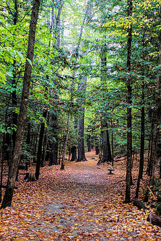 The Beauty of New Hampshire by Tabatha Knox
