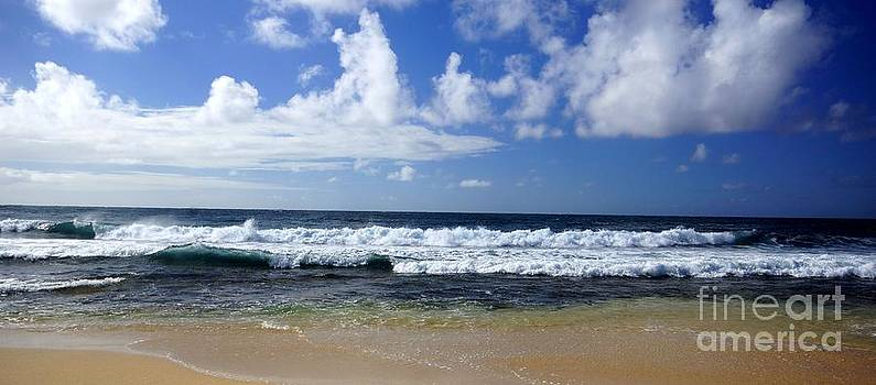 The Beauty of the Ocean by Tabatha Knox