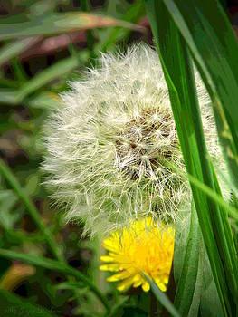 Joyce Dickens - The Beauty Of Weeds