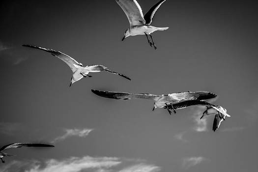 The Birds by Brent Roberts
