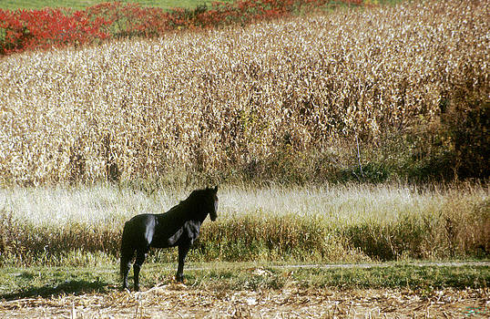 The Black Horse by Jon Lord