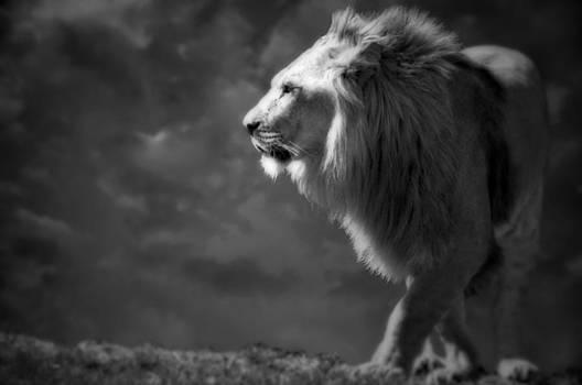 Emily Stauring - The Black Roar