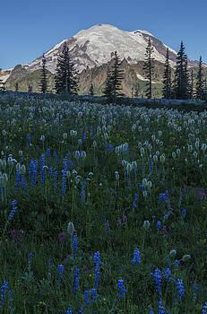 The Bloom by Ross Murphy