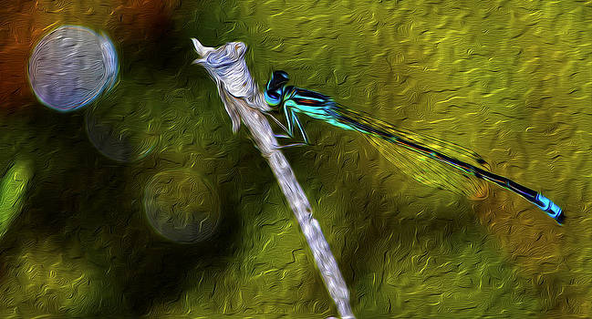 The Blue Dragonfly by Timothy Hack