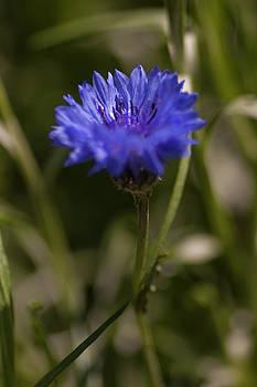 Gilbert Artiaga - The Blueboy Flower