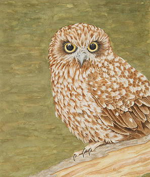 The Boobook Owl by Katharine Green