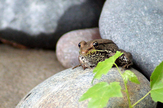 The Bronze Frog by Kim Pate