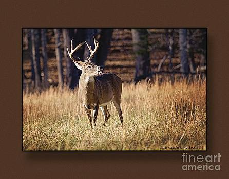 The Buck by Laurinda Bowling