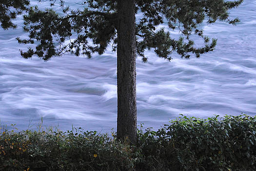 Mary Lee Dereske - The Bulkley River