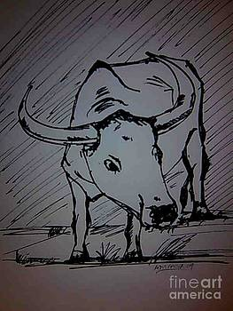 The Bull by Asm Ambia Biplob