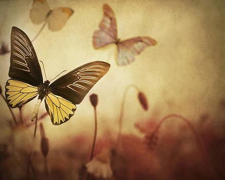 The Butterfly Garden by Irene Suchocki